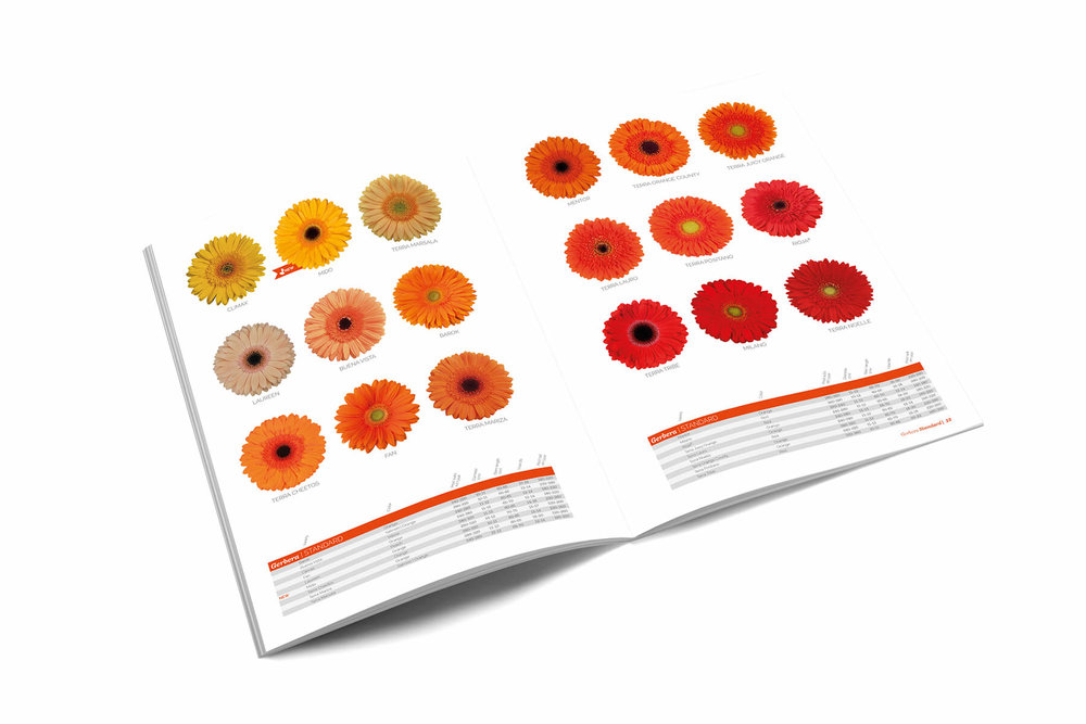 Mockup brochure.jpg
