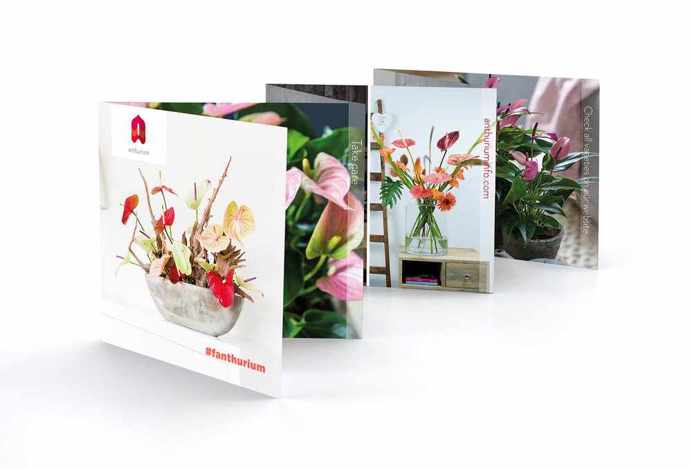 Anthurium Brochure 1.jpg