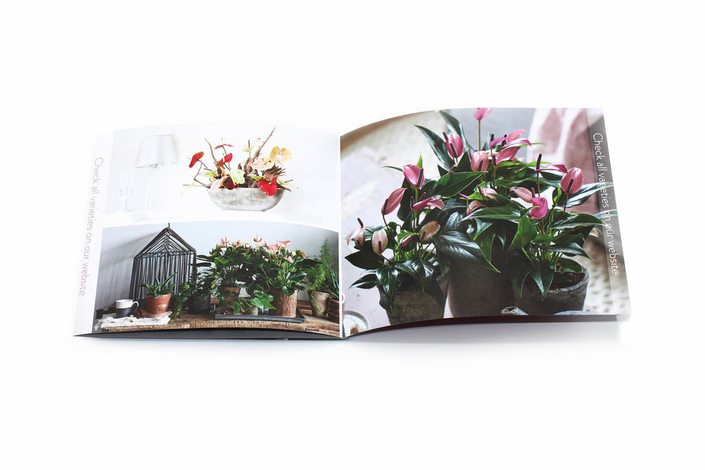 Anthurium Brochure 2.jpg