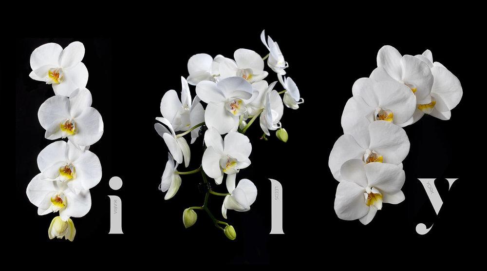 Beeld orchideen.jpg