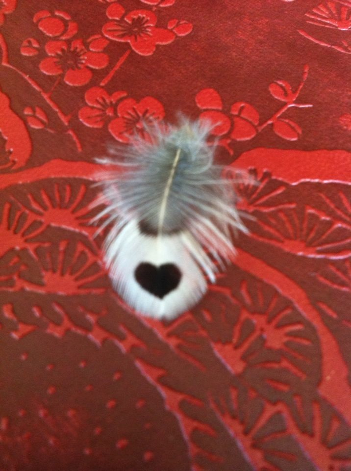 heart feather on red background.jpg