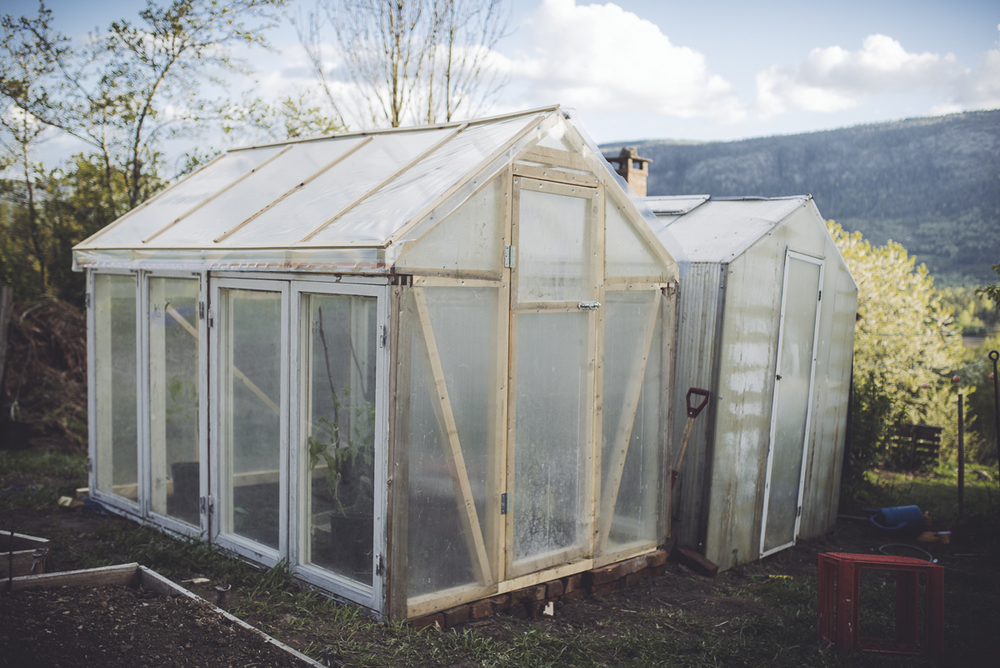 Diy greenhouse making use of old windows zoo payne for How to build a greenhouse using old windows