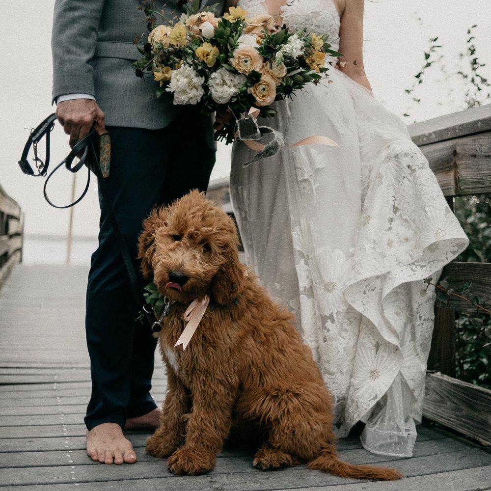 small weddings + elopements -
