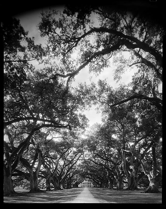 Oak Alley 8x10.jpg