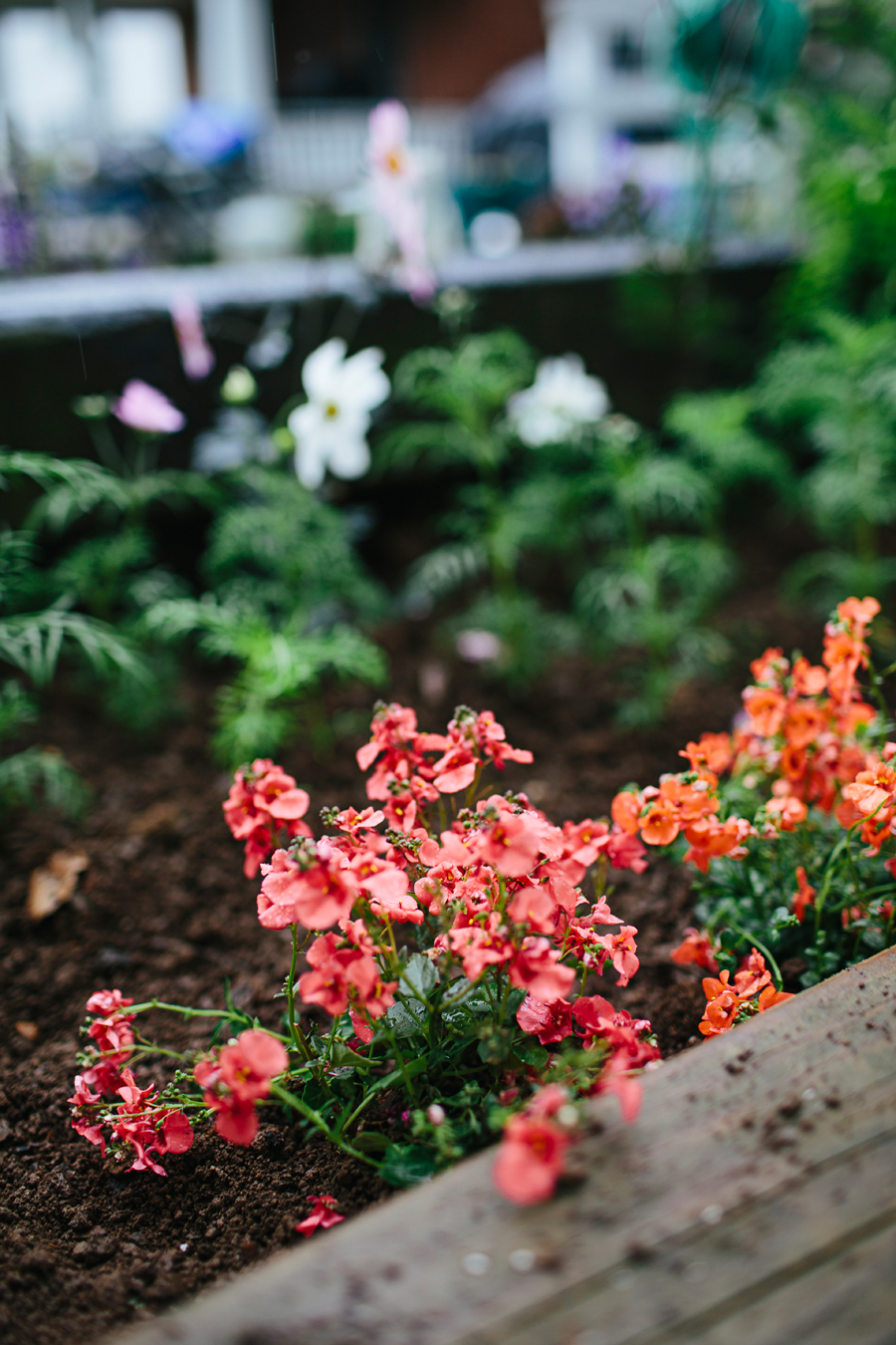 brookecourtney_gardenbeforephotos-18.jpg