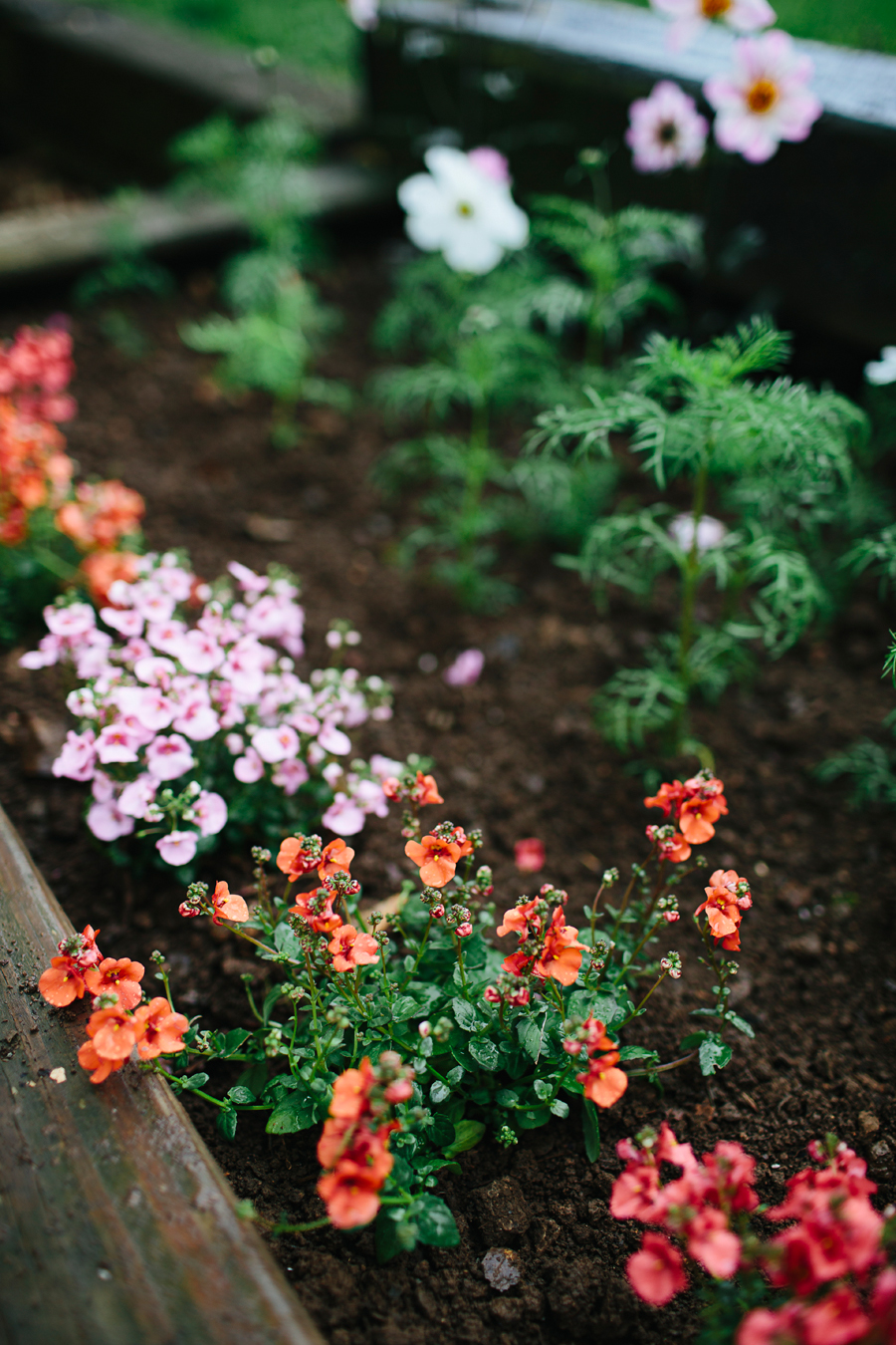 brookecourtney_gardenbeforephotos-19.jpg