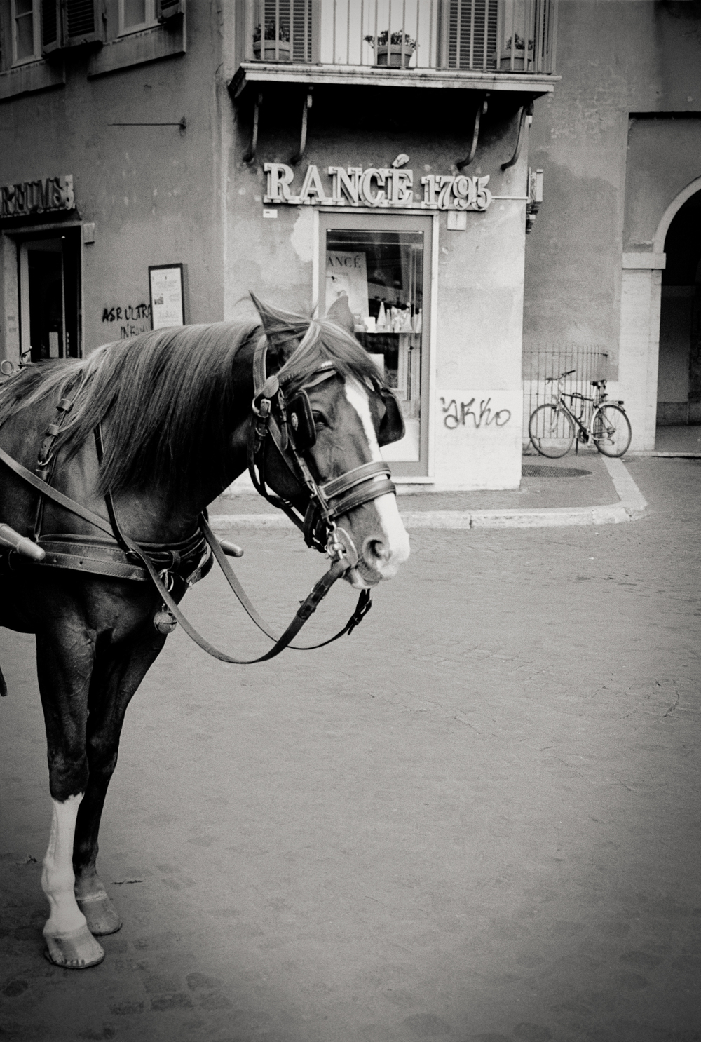 horse, Florence, Italy 2001.