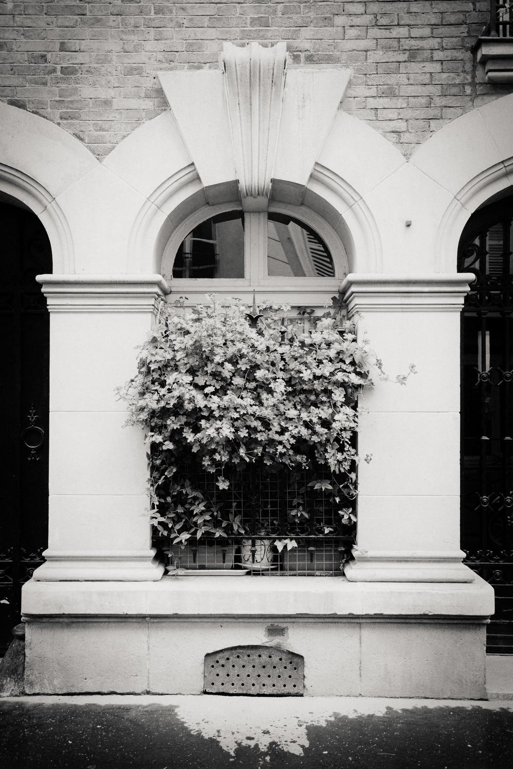 window box, Paris 2014.