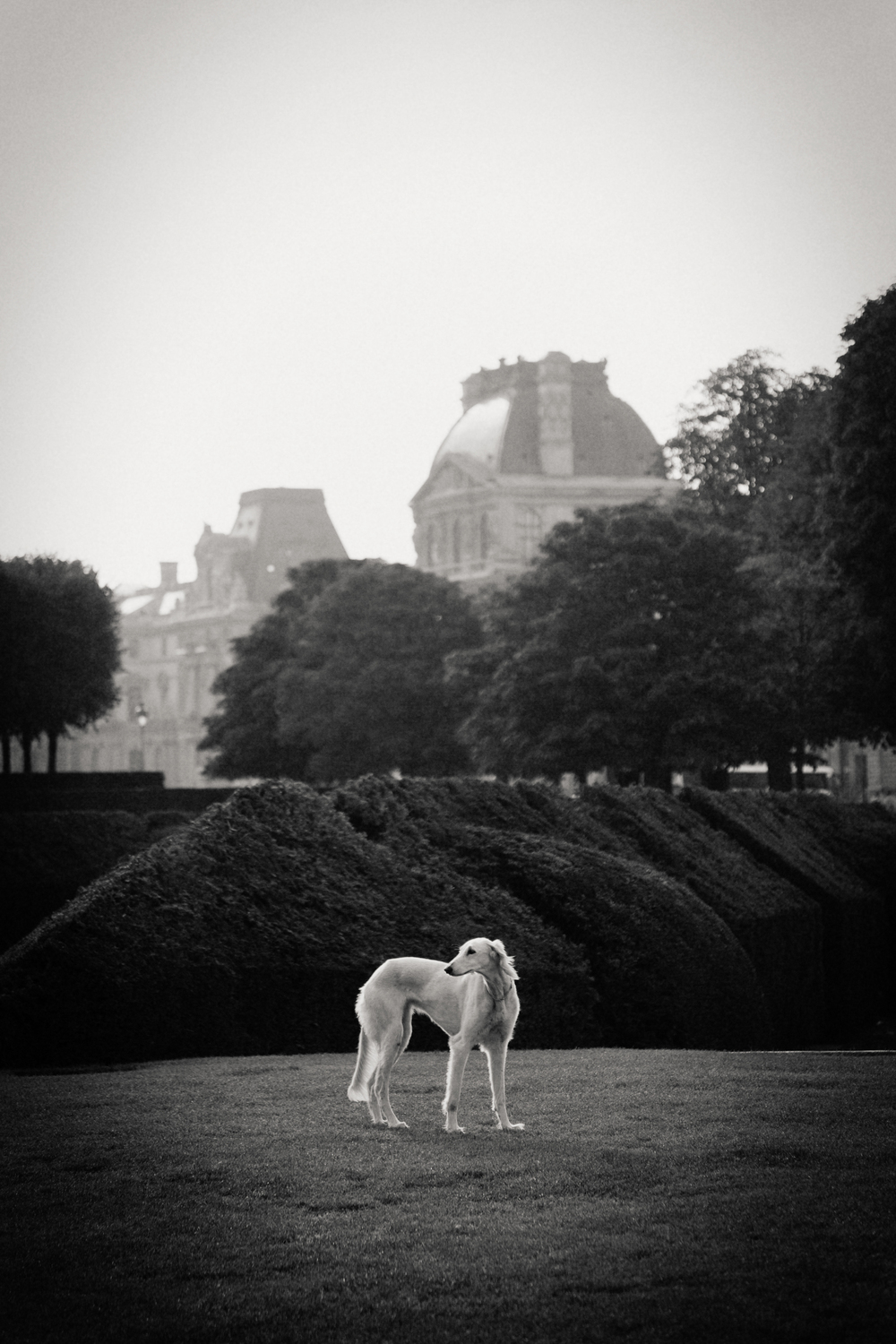 dog in park, Paris 2014.