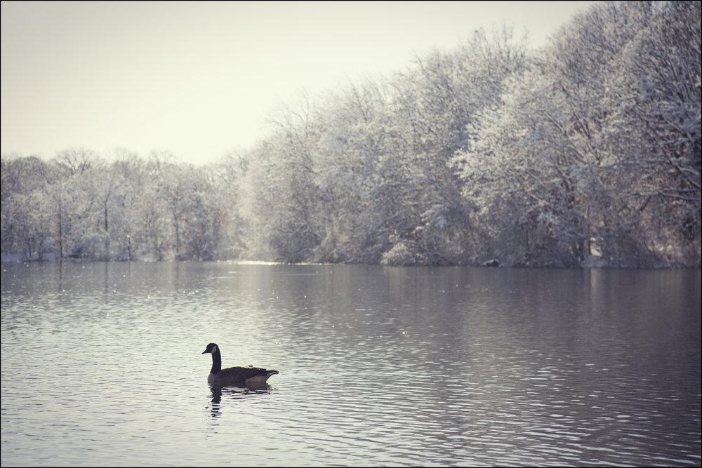 goose, 2015.