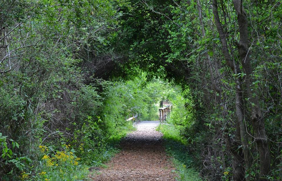 Ocmulgee trail.jpg