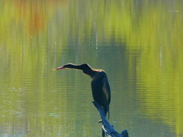 wetlands 2 RL 2015.jpg