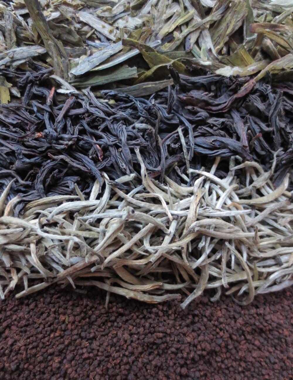 TeaFields.jpg