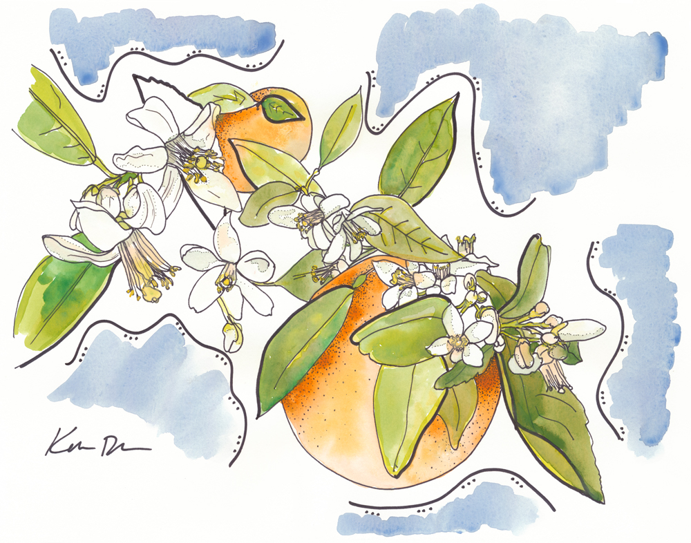 SOLD Orange Blossom