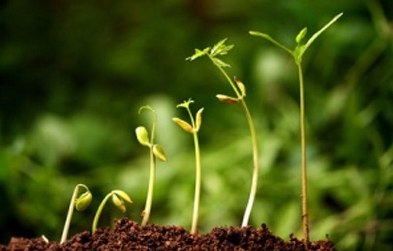 steve_blog_greenplants.jpg