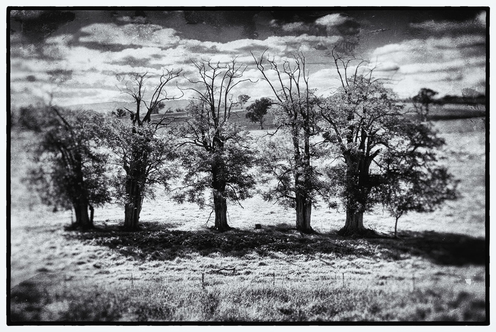 5 trees, Hume Highway, near Gunning.