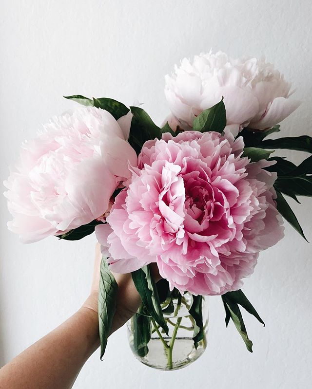 Why can't peonies be a year around flower??