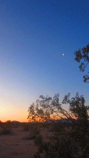Larrea sunrise w luna.JPG