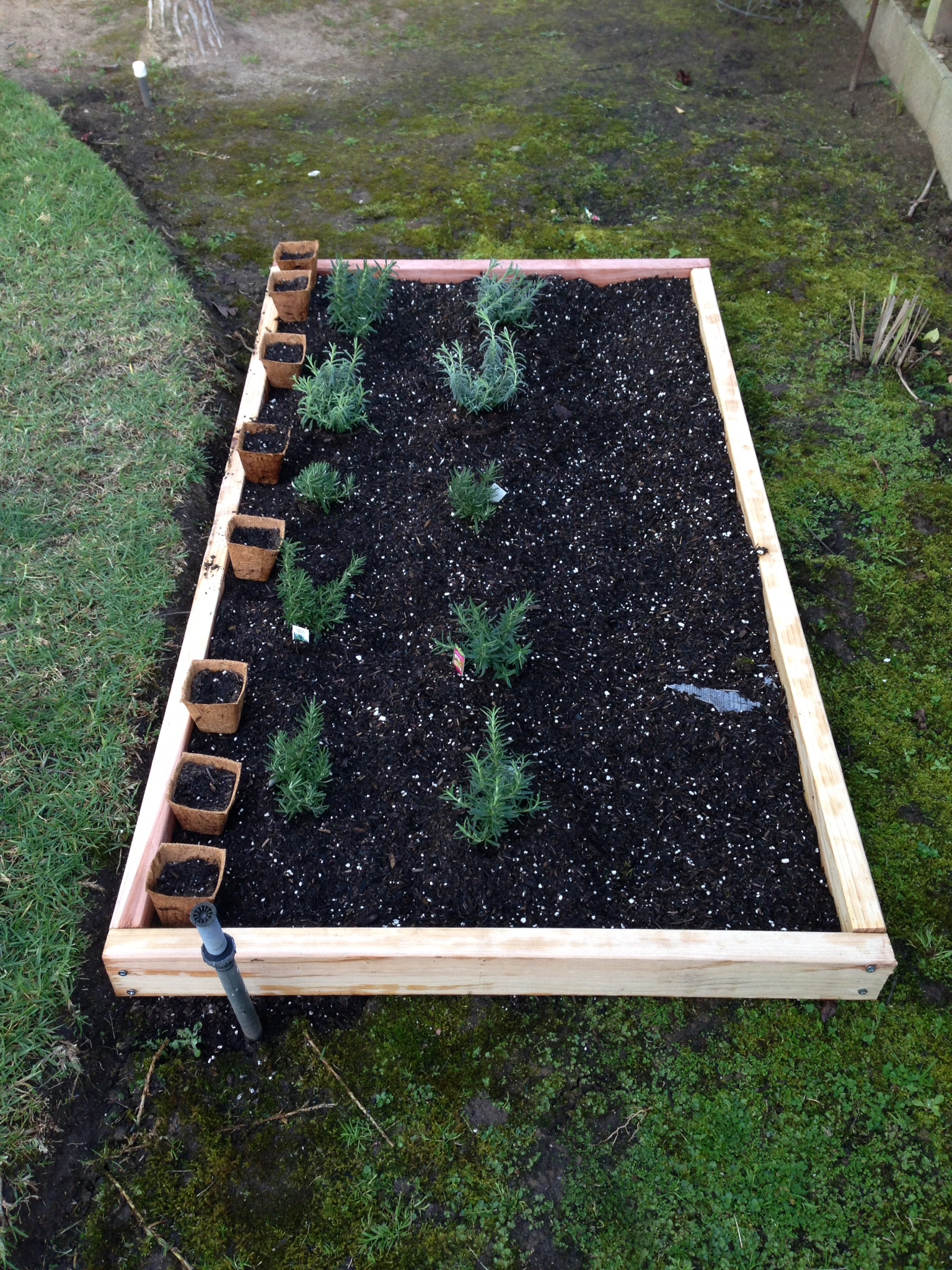 DIY How to Build a Simple and Cheap Raised Garden Bed TamThyme
