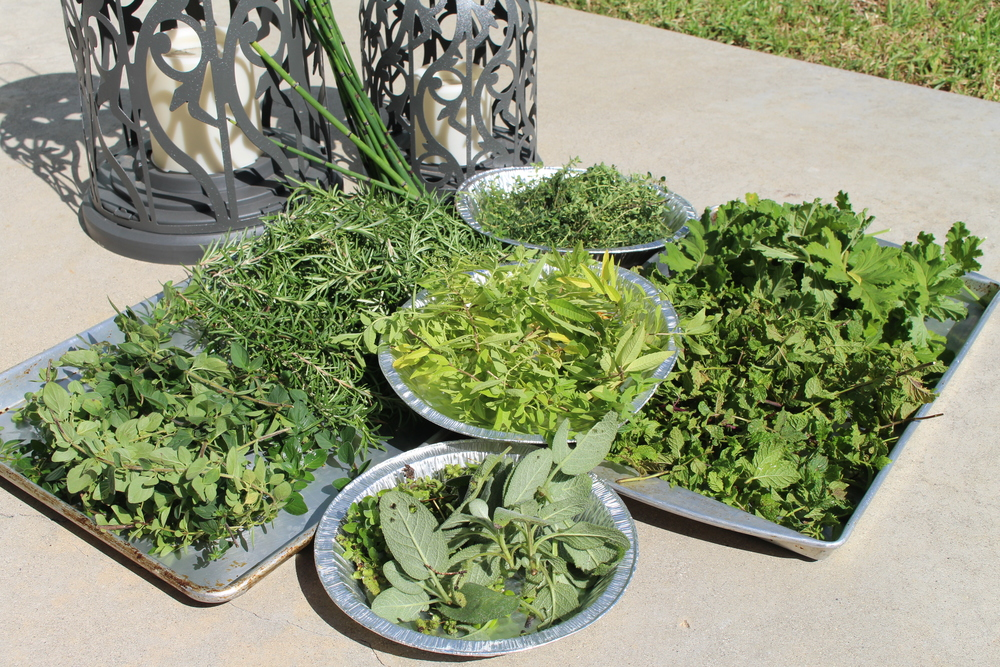 Freshly picked Sage, Marjoram, Lemon Verbena, Thyme, Lemon Thyme, Mint, Geranium and Horsetail