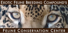 Image used courtesy of the Exotic Feline Breeding Compound's Feline Conservation Center