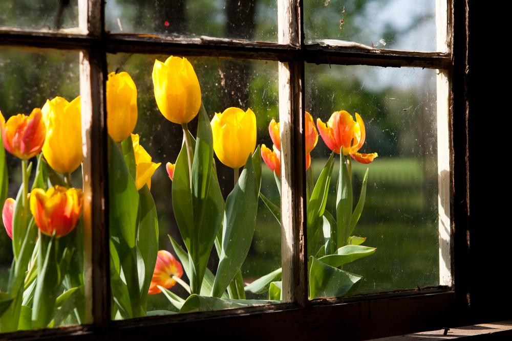 Flowers-002.jpg