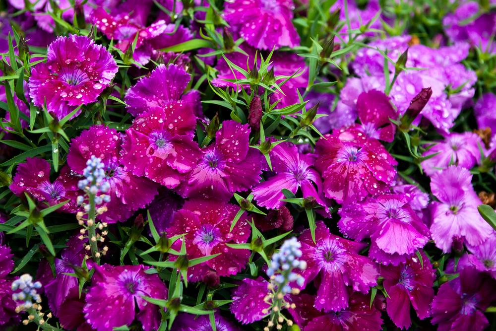 Flowers-004.jpg