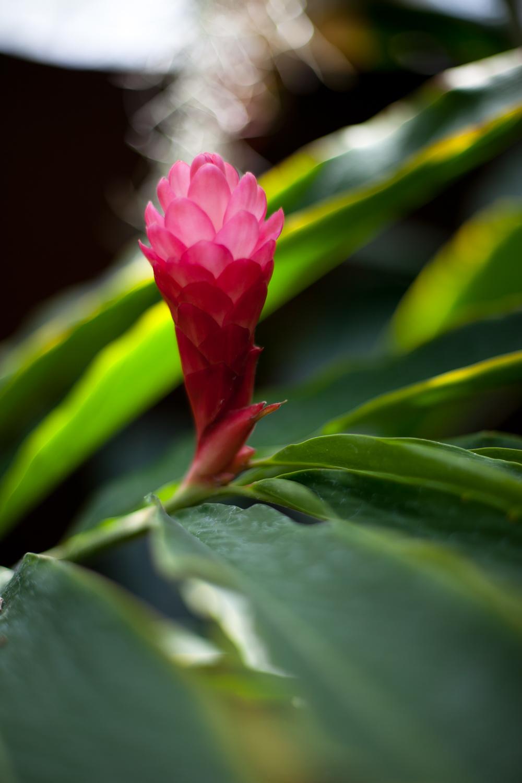 Flowers-027.jpg