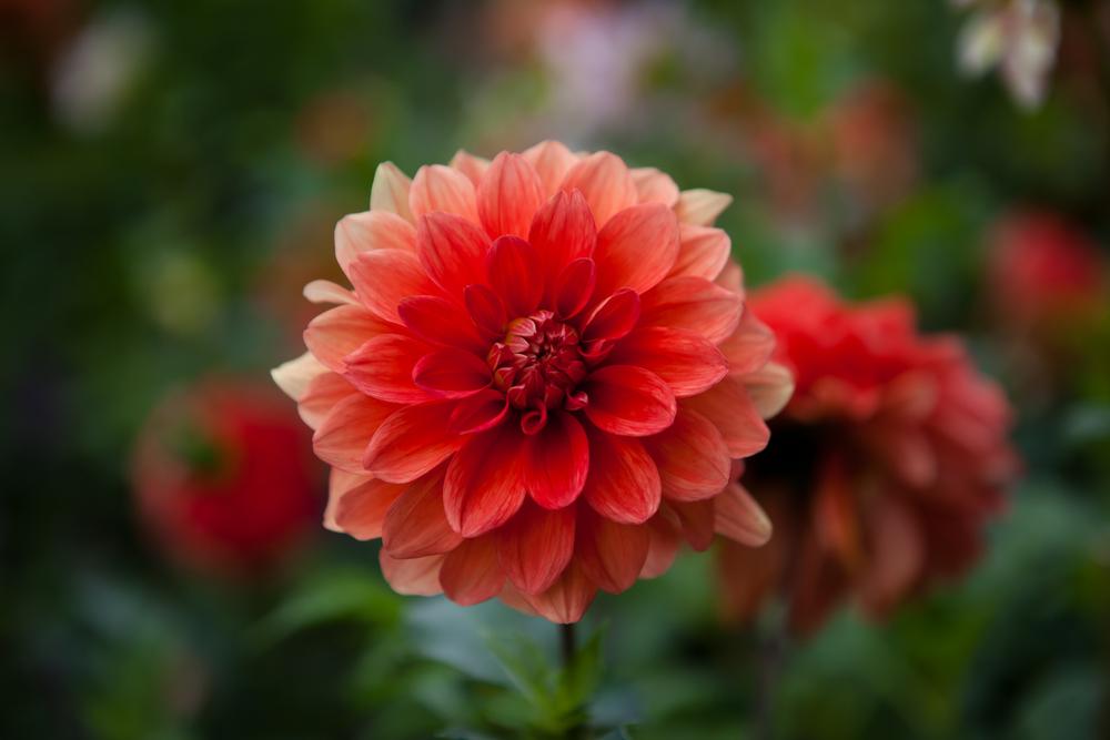 Flowers-017.jpg