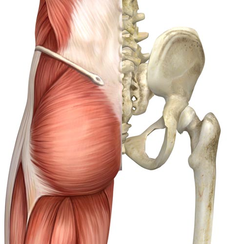 5 Things We Didnt Learn About The Si Joint In Yoga Teacher Training