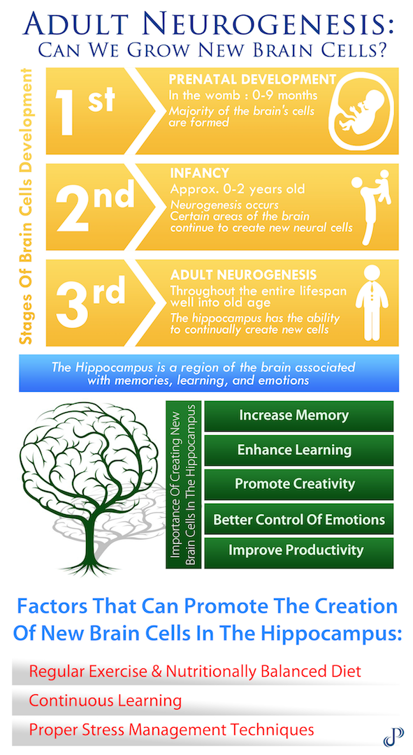 Adult Neurogenesis Infographic