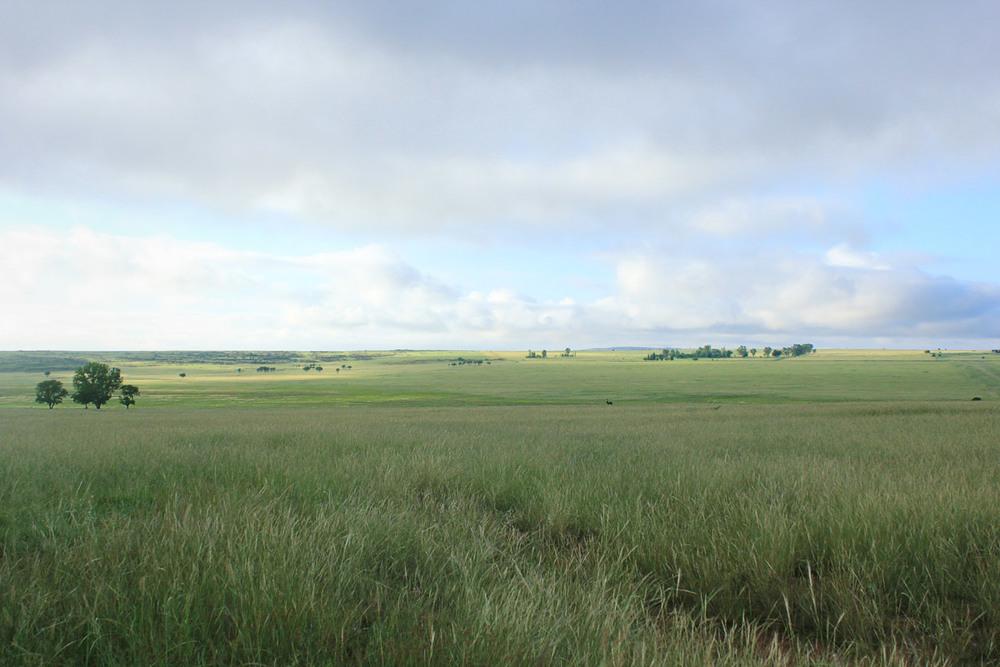 Grasslands inside the reserve. Plenty of Black and Blue wildebeest around.