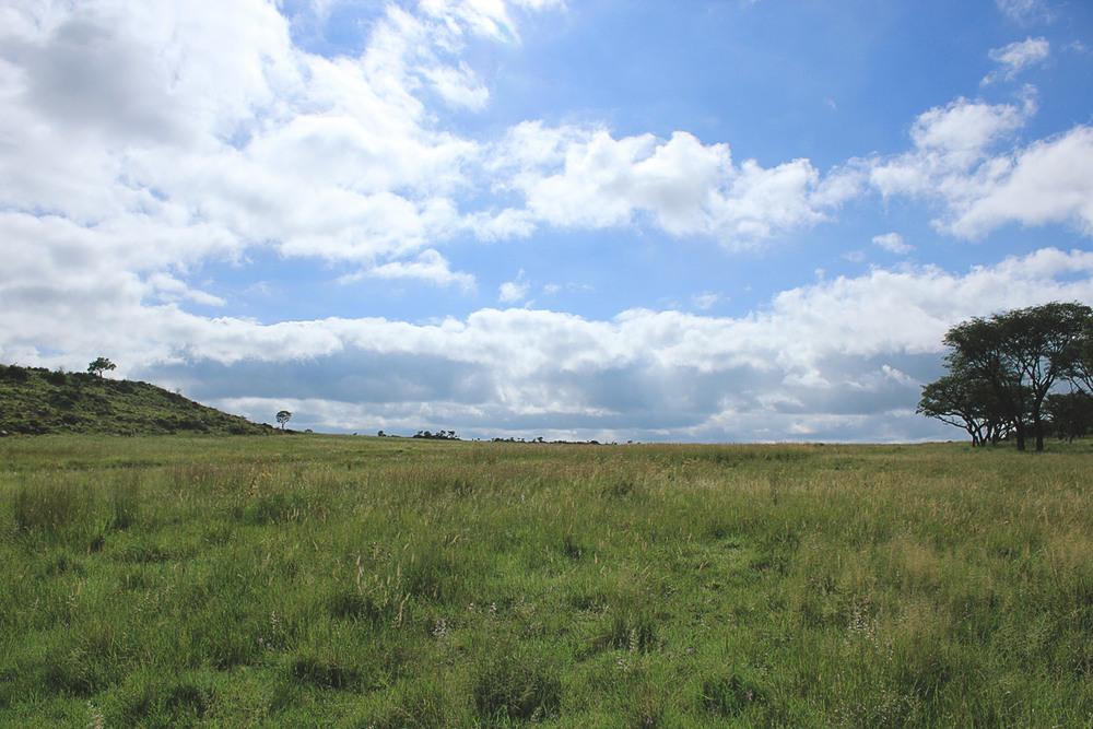 Mpumalanga Grasslands.
