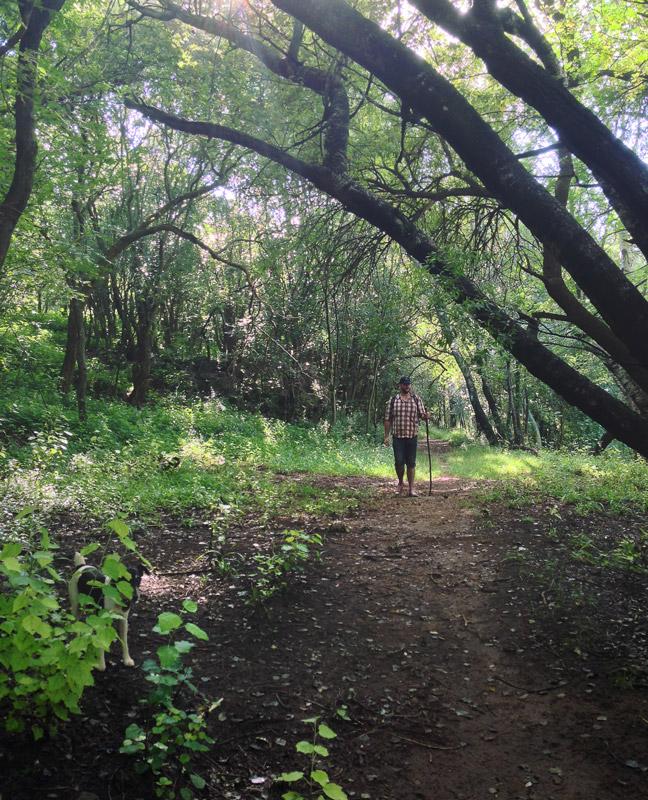 01 Hennops – Trees.jpg