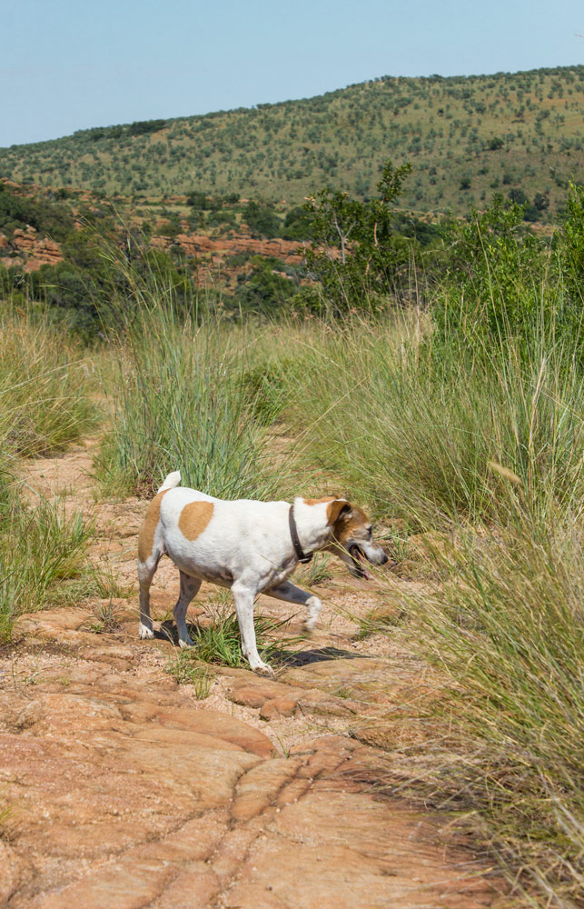 Someone's#adventuredog.