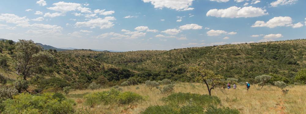 Buffelshoek Farm, Magaliesberg.