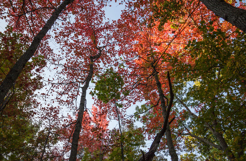 We hiked north to meet fall. This is the Autumn canopy of the forest in Virginia just before peak foliage
