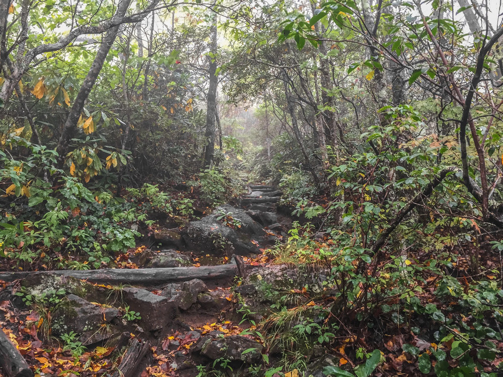 12 North Carolina Appalachian Trail.jpg