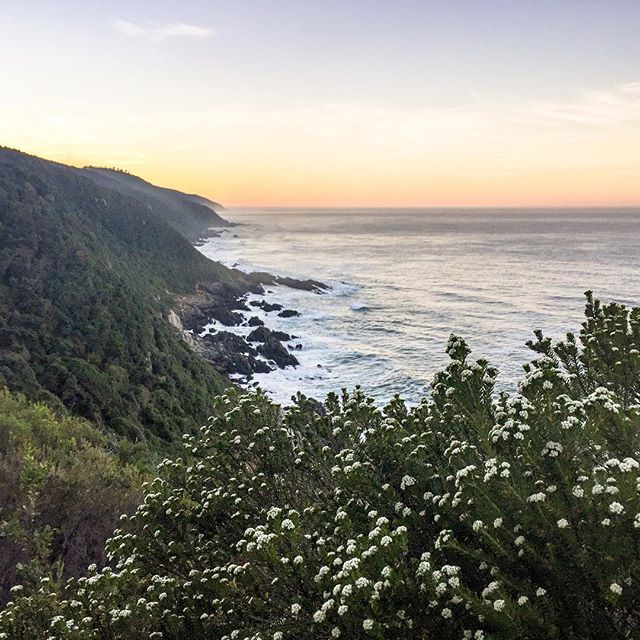 Flowering #fynbos along the plateau of the #ottertrail. If you're lucky you might even spot a humming bird or two. #sofar #otter #tsitsikamma #hike #hiking #cliff #ocean #view #southafrica #thisissouthafrica #nature #outdoors