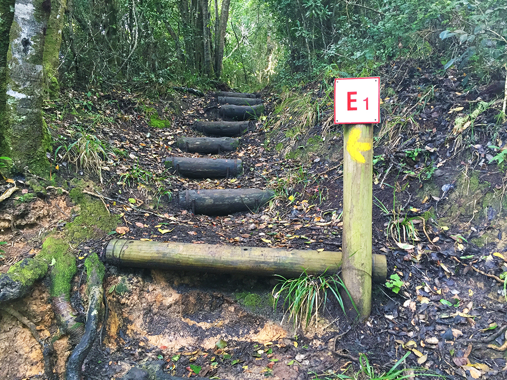 There are six escape routes situated along the trail: E1 - Ngubu Escape Route, E2 - Kleinbos River Escape Route, E3 - Bloubaai Escape Route, E4 - Geelhoutbos Escape Route, E5 - Jan Swarts Route, E6 - Bloukrans Route. Collect a map of the escape routes at the start of the trail.