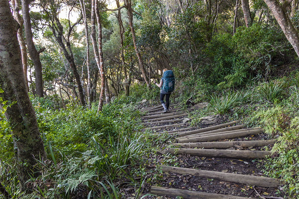 The first of many stairs –  The Otter Trail Day 1.