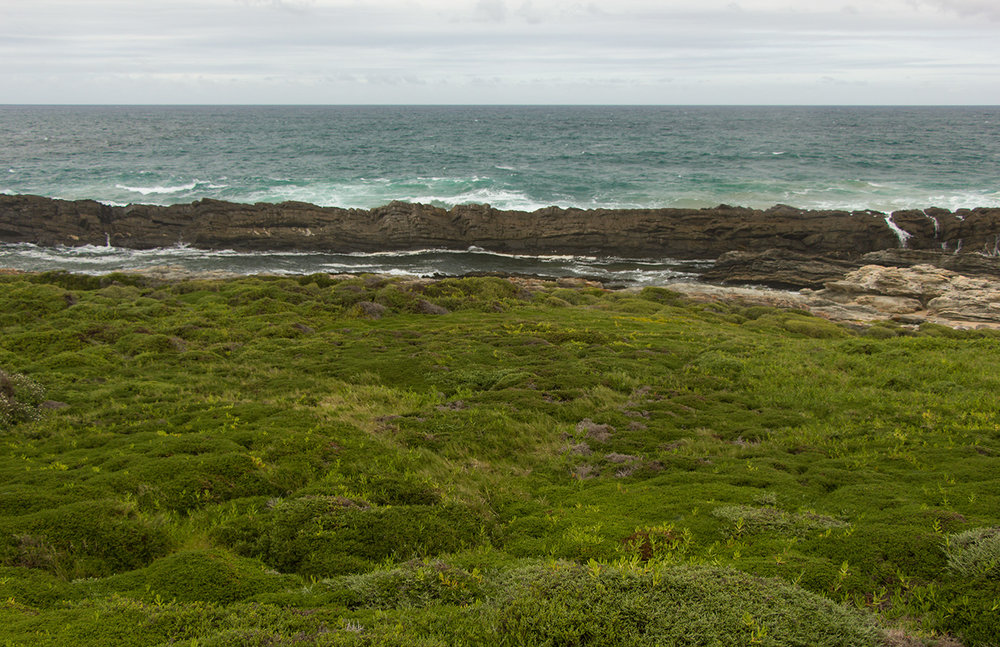 The Otter Trail Day 3 – Fynbos and endless horizons.