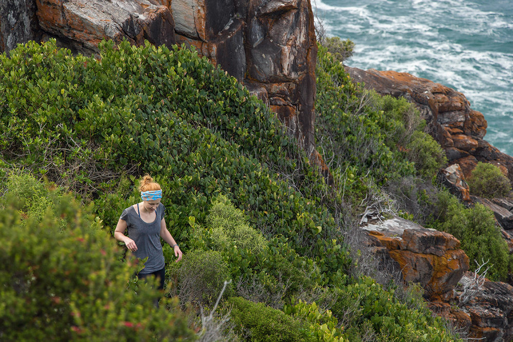 The narrow trail cuts through thick coastal fynbos.  Click image to expand.