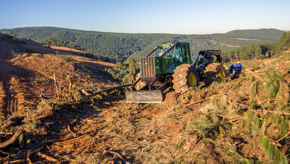 One of the Sappi plantations being harvested.