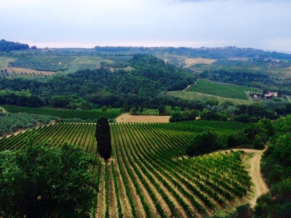TuscanHarvestThree.jpg