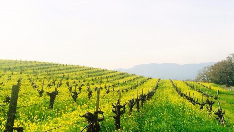vineyards%2Bcover%2Bphoto.jpg
