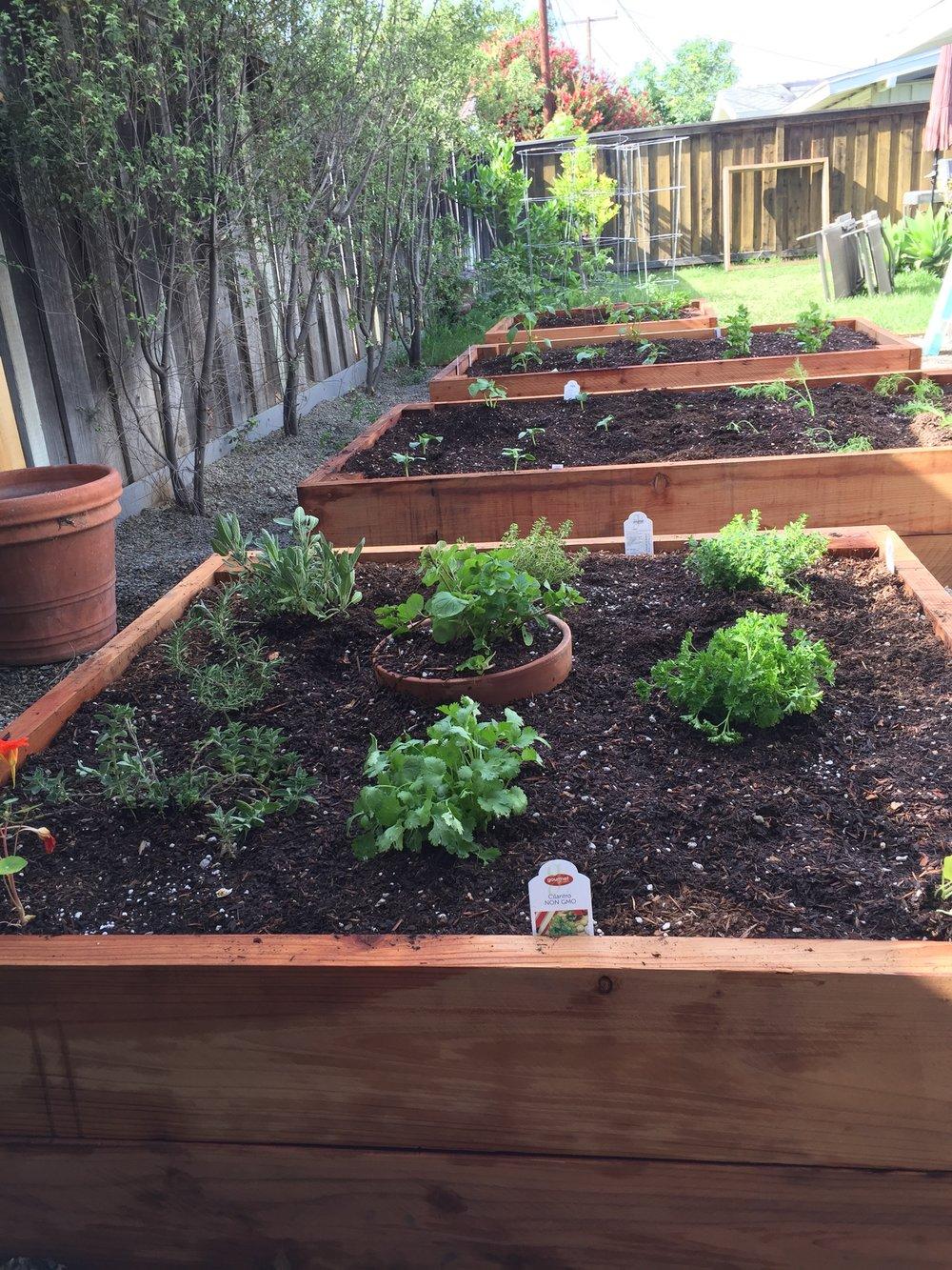 Garden   1 (6)