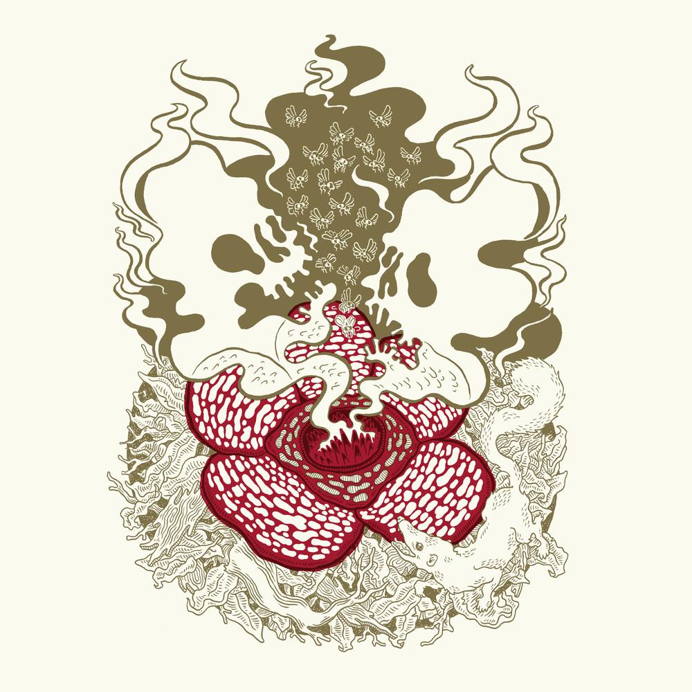Rafflesia.jpg