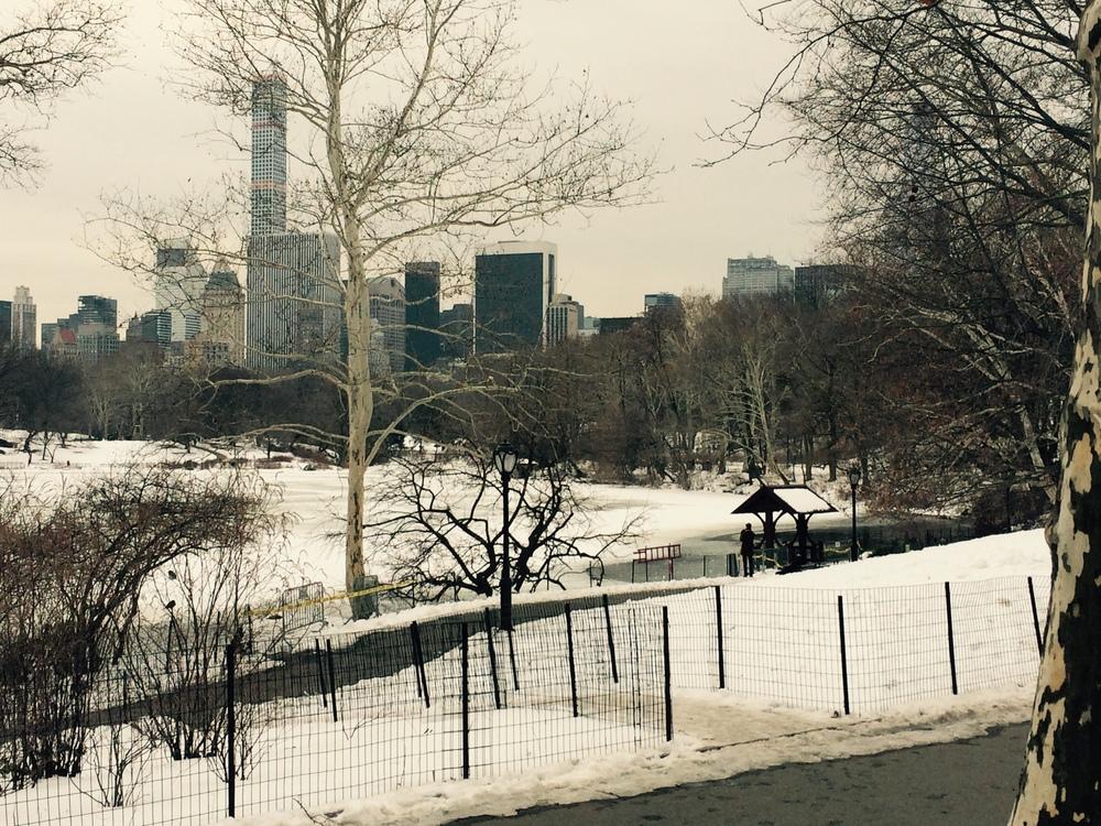 Snowy February 1st, Central Park, Manhattan, 2015