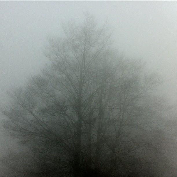 2012-04-02_1333405612.jpg